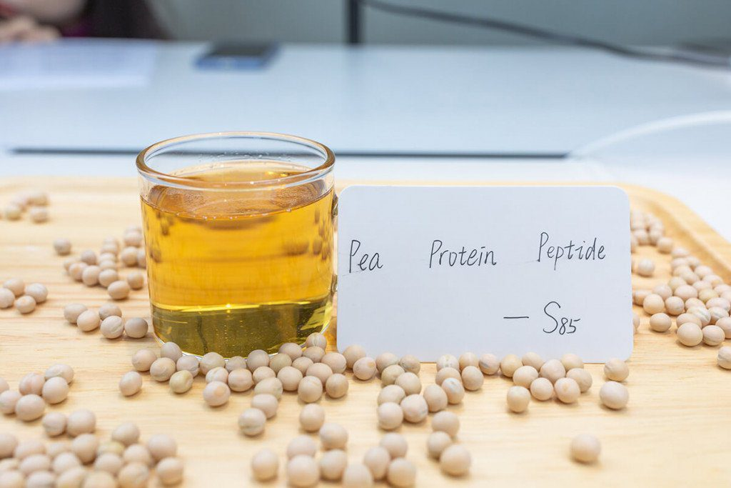 pea protein manufactory