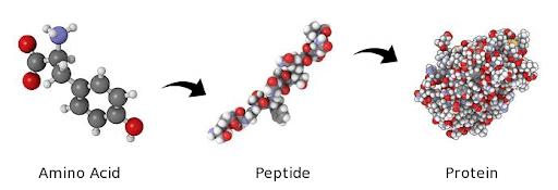 collagen and collagen peptide- zxchem group